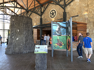 View of the exhibit display that features local flora and fauna