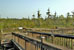 Boardwalk over Blue Elbow Swamp